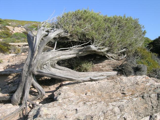 Door de wind gevormd natuurmonument