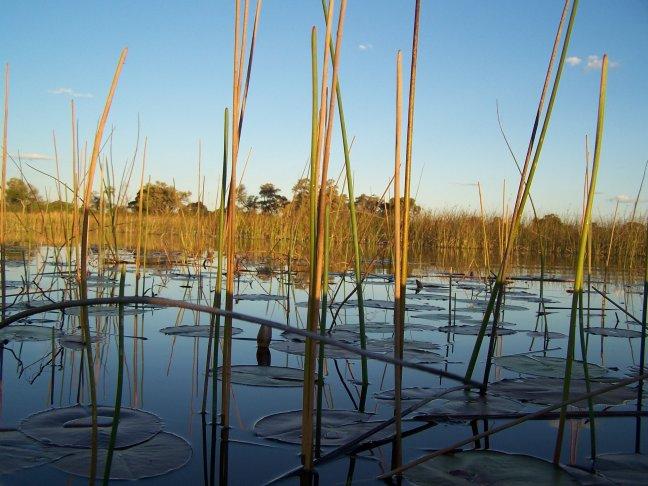 Uitzicht vanuit de mokoro in de Okavango Delta