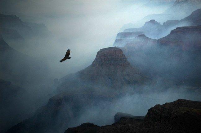 Grand Canyon met overvliegende kalkoengier.