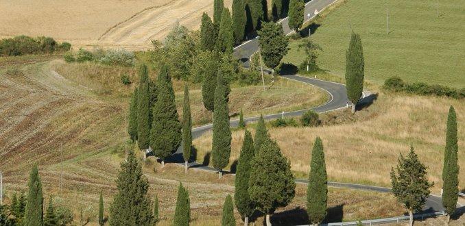 Slingerweg met cipressen