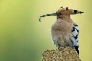 Vogelen in Toscane