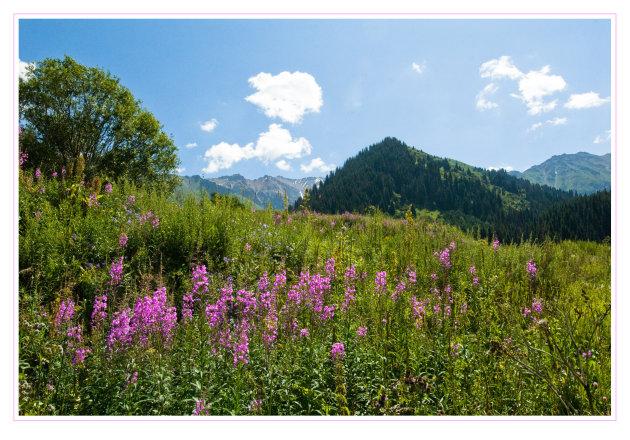 Bloemen in Big Almaty Valley