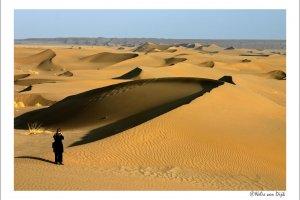 Golven in de woestijn