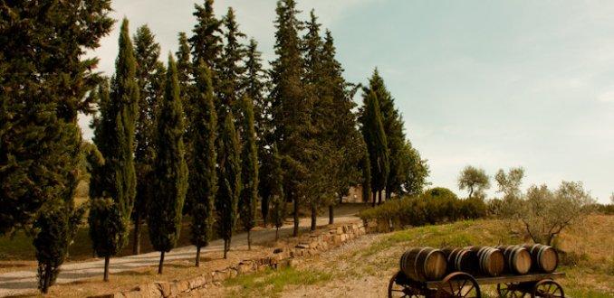 Tuscany Landscape and Trees