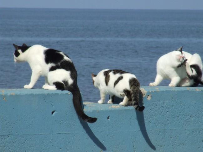 Katjes in de zon