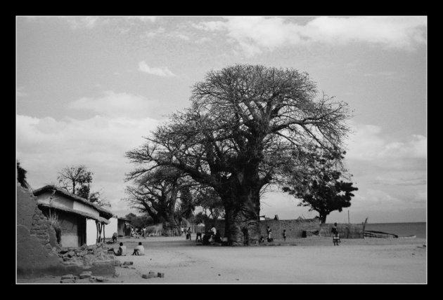 de dorpsboom
