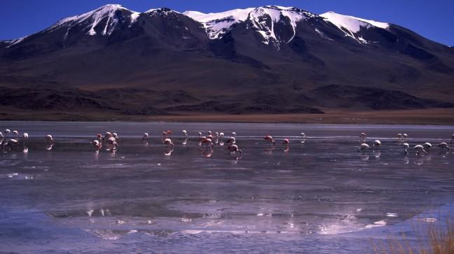Spiegelende flamingo's