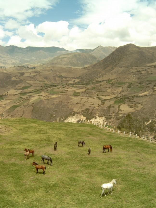 De vallei der paarden