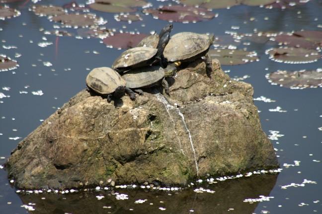 Schildpadden onder kersenboom