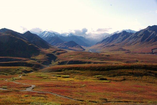 Herfst in Denali