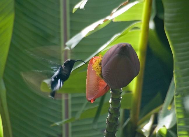 Kolibri 'in action'