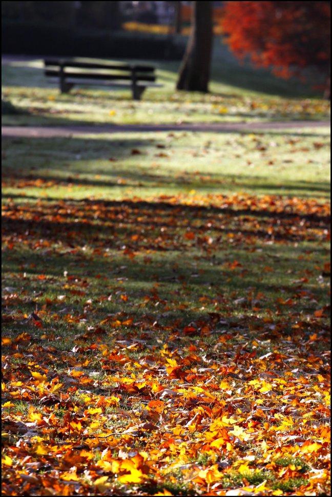 herfst-stilleven...