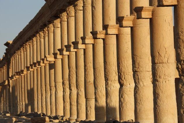 Palmyra sunset