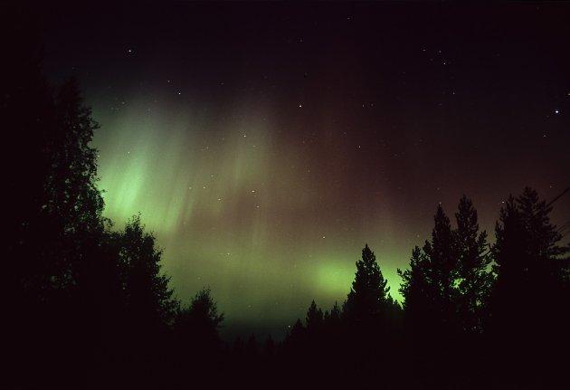 Noorderlicht in Salla - Fins Lapland