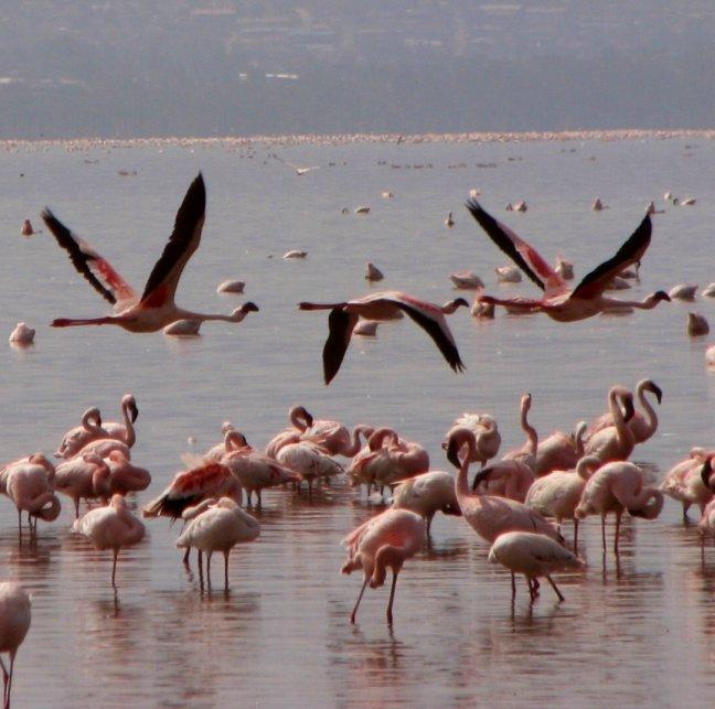 Kenia op-neer-op