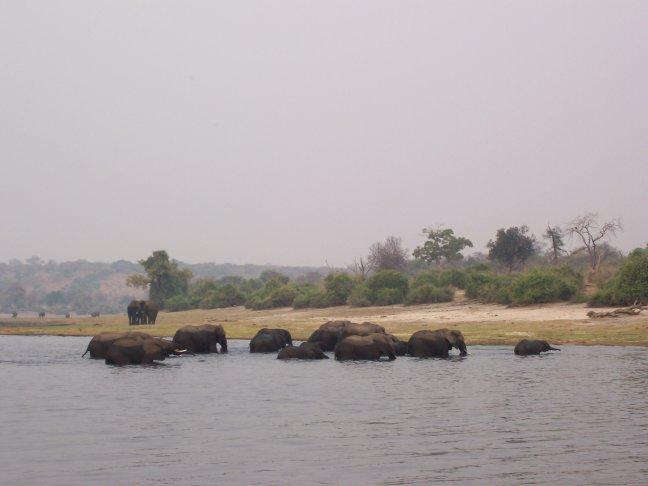 Olifantenoversteek