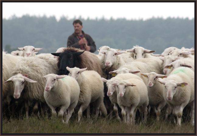 Goede zorg, ook voor het zwarte schaap