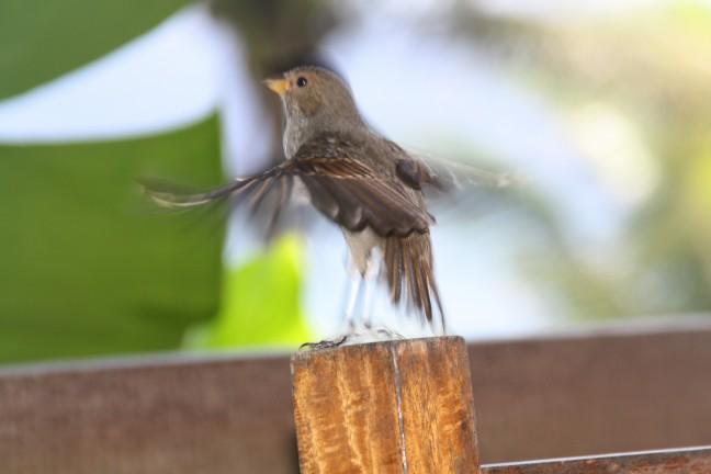 Grappig vogeltje