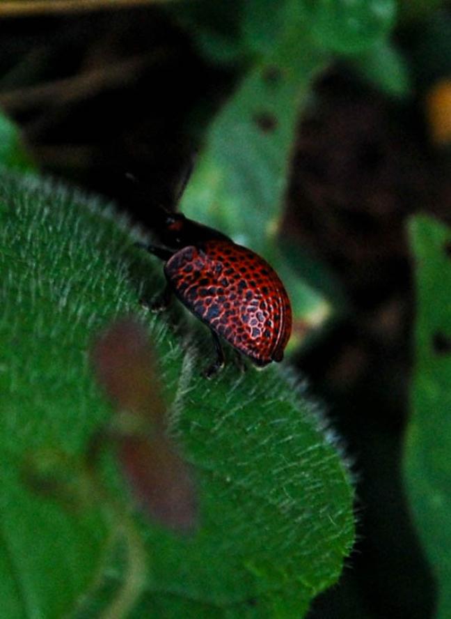 Beestje in de Amazone