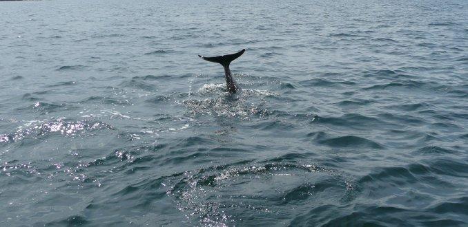 cape breton walvis