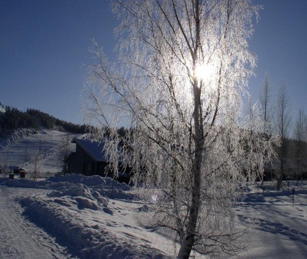 Zie de zon schijnt door de bomen ....