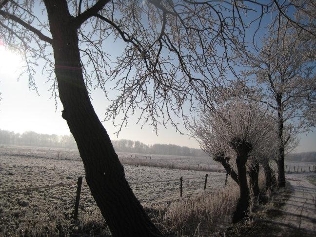 Biessum in Sneeuw