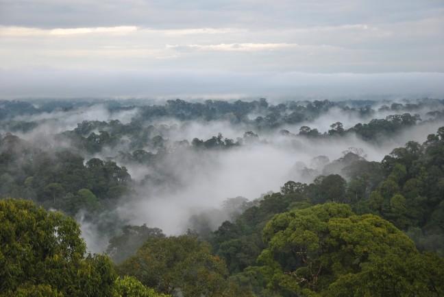 Brunei's regenwoud
