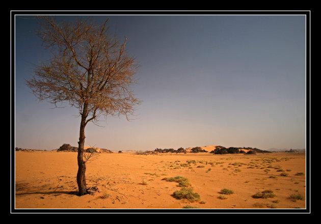 Een boom in de woestijn!