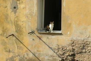 CAT OF ELBA