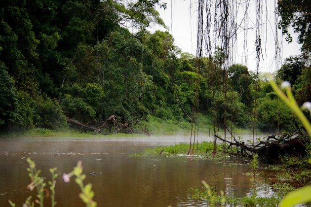 Amazone woud at Madidi