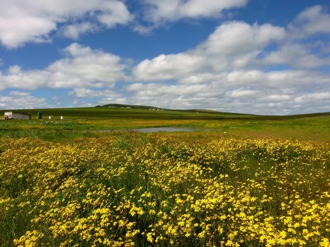 oorspronkelijk landschap in de lente
