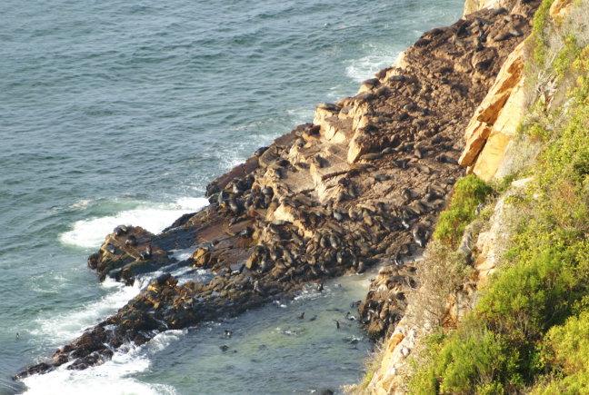 Volop zeehonden