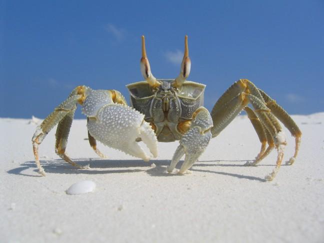Krab op een onbewoond eiland
