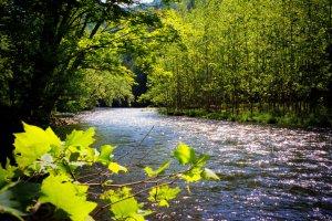 Pine Creek, Pennsylvania