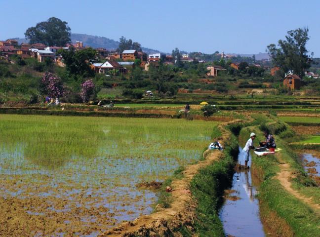 tussen de rijst en de was, Ambositra