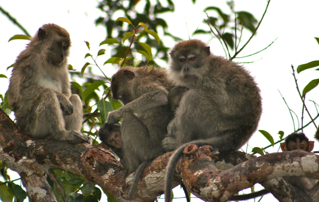 alle aapjes op een stokje!
