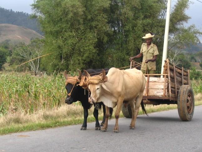 Man met paard en wagen