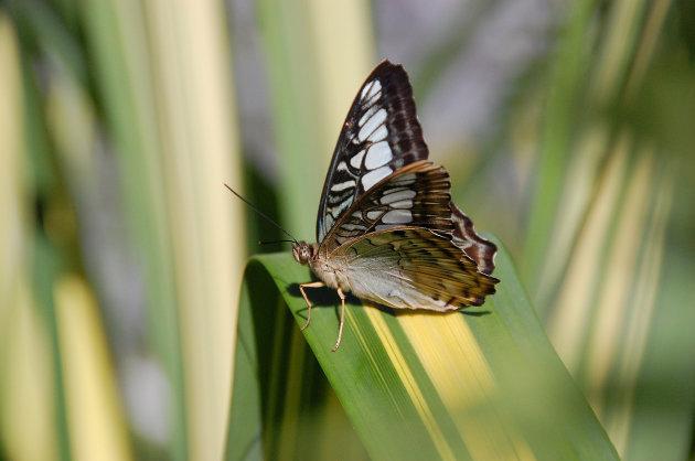 Vlinder tipfoto