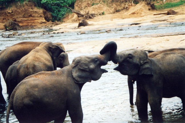 Olifanten in weeshuis