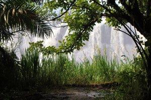 Victoria Falls vanuit de Bush!