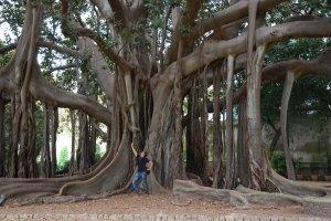 170 jaar oude boom