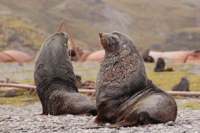 zeeleeuwen houden wacht