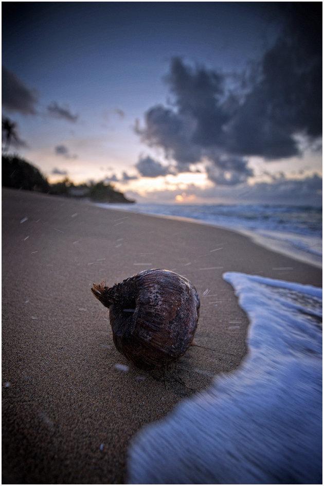 Surfin' coconut