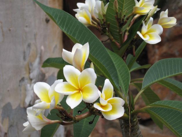Flora in Mauritius