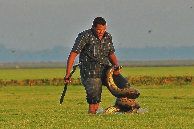 Llanero in gevecht met een Anaconda