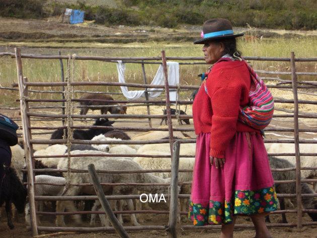Oma 's avonds bij de schapen