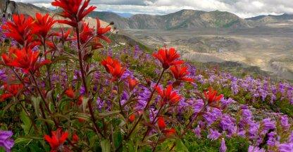 Vruchtbare grond rondom Mount St. Helens