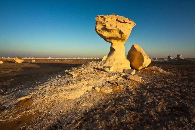 paddenstoelen in de witte woestijn