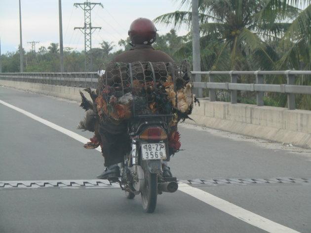 Kippenvervoer