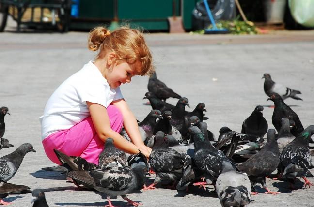 veel duiven in Kraków